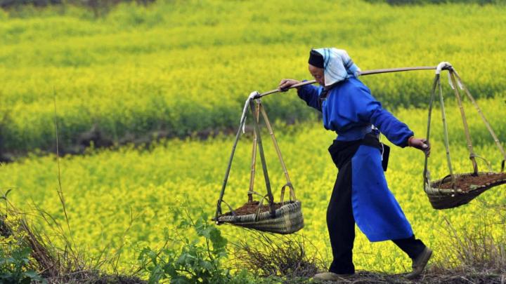 Người dân vùng nông thôn Trung Quốc chi số tiền lớn mua hàng trực tuyến