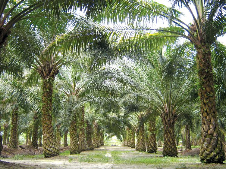 Bỉ tuyên bố sẽ xóa bỏ dầu đậu nành và dầu cọ để làm nhiên liệu sinh học