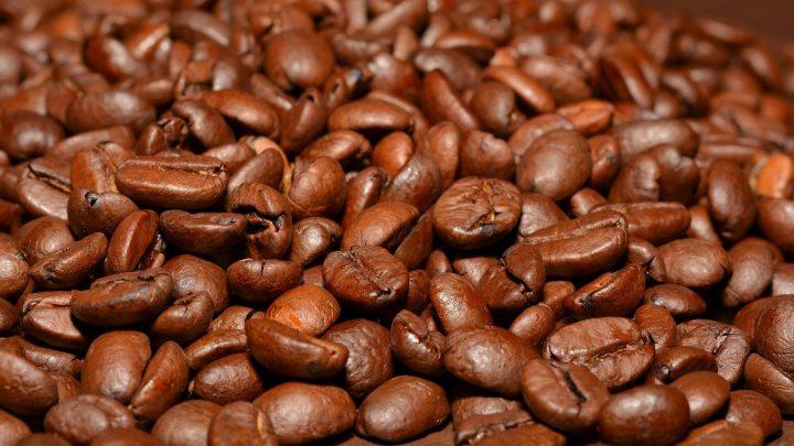 Cà phê Stenophylla sẽ trở thành xu hướng mới trong ngành cà phê?