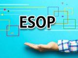 SFI phát hành ESOP tỷ lệ 5% với giá 10,000 đồng/cổ phiếu
